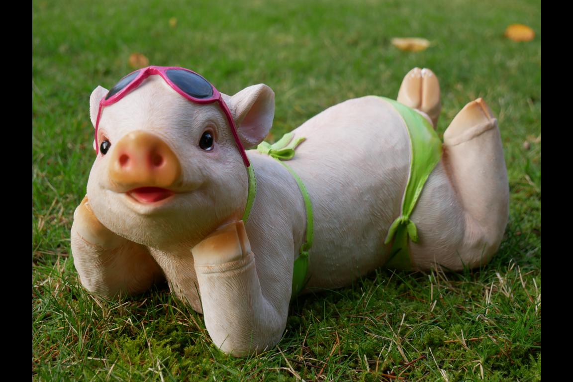 Pig in a bikini photo